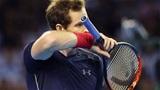 Murray bị del Potro phục hận ở bán kết Davis Cup