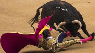 Chuyện học đấu bò  ở Tây Ban Nha