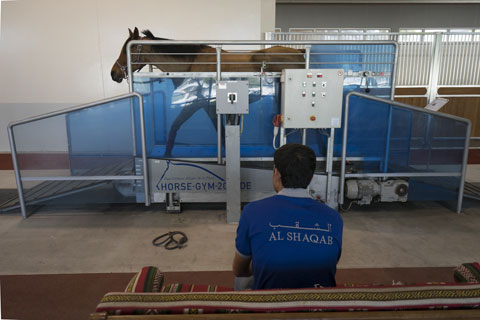 Bể sục trị liệu dành cho ngựa tại Al Shaqab