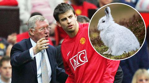 Sir Alex từng phát điên vì chuyện Pique nuôi thỏ
