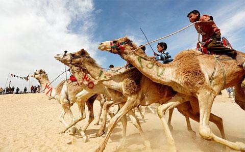 Một cuộc đua lạc đà tại Abu Dhabi