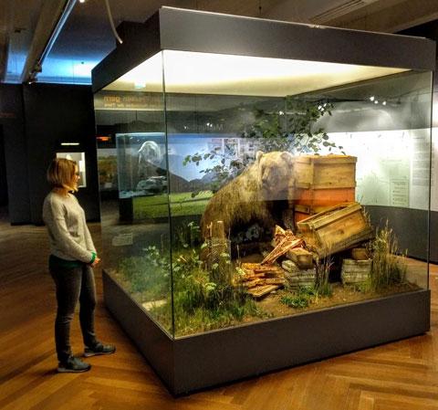 Bruno được nhồi bông để trưng bày trong bảo tàng ở Munich