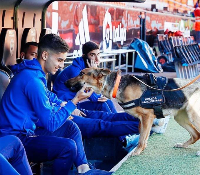 Torres dành tình cảm đặc biệt với những chú cún
