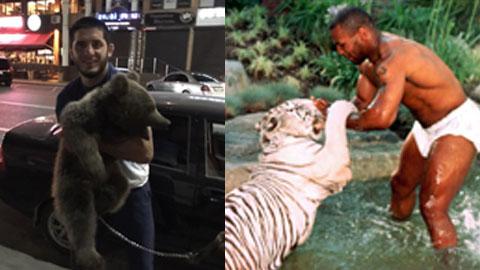 Cả Tyson lẫn Nurmagomedov đều có chung sở thích nuôi thú dữ