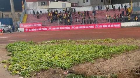 Sân bóng V.League: Luống cải & những CĐV hào sảng