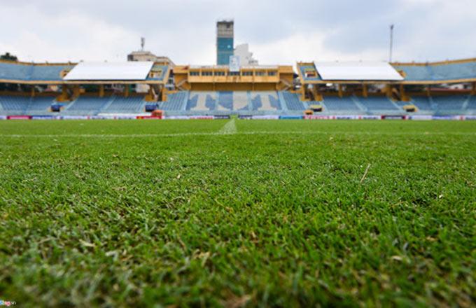 Một số các CLB V.League dùng loại cỏ lá kim trên sân nhà