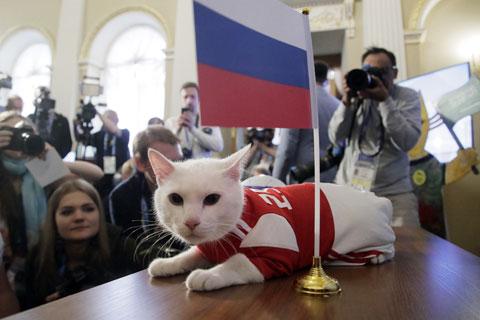 Do bị điếc, mèo Achilles không bị phân tán tập trung bởi tiếng động xung quanh